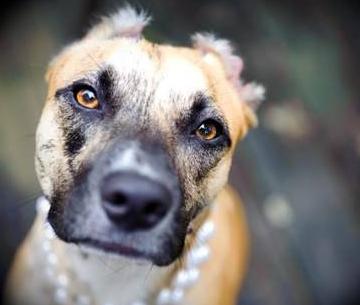Pet Adoption Fairs Long Island Ny