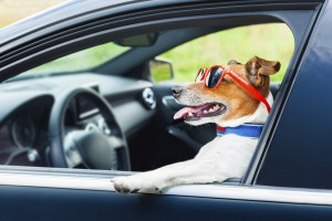 dog car  steering wheel