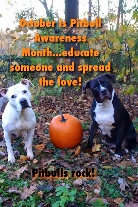 Choke Free Dog Harness Etsy