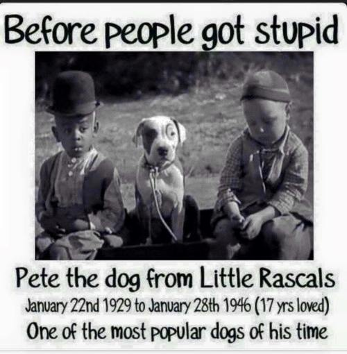 Name Of The Dog In The Little Rascals