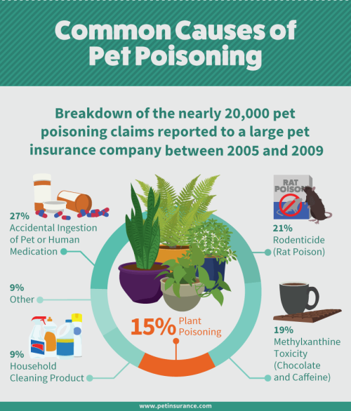 common-causes-of-pet-poisoning