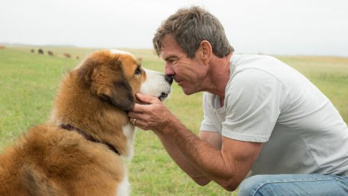 a_dogs_purpose_still